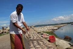 Trockenfisch im Hafen von Beruwela