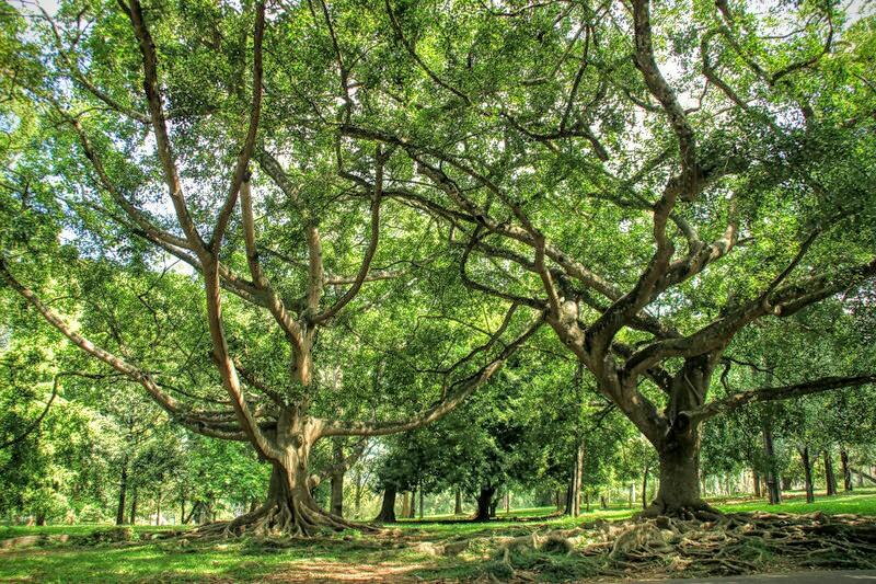 Botanischer Garten nahe  Kandy