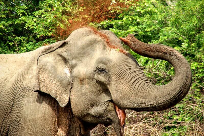 Elefant im Yala National Park