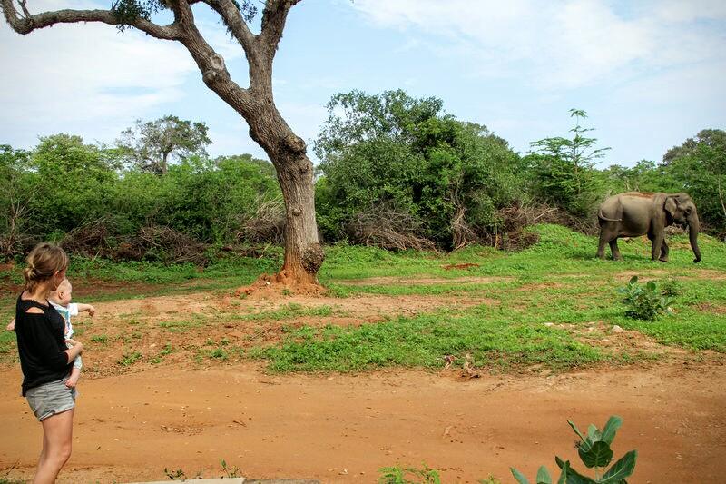 Elefant zu Besuch auf dem Picknickplatz