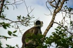 Äffchen im Yala National Park